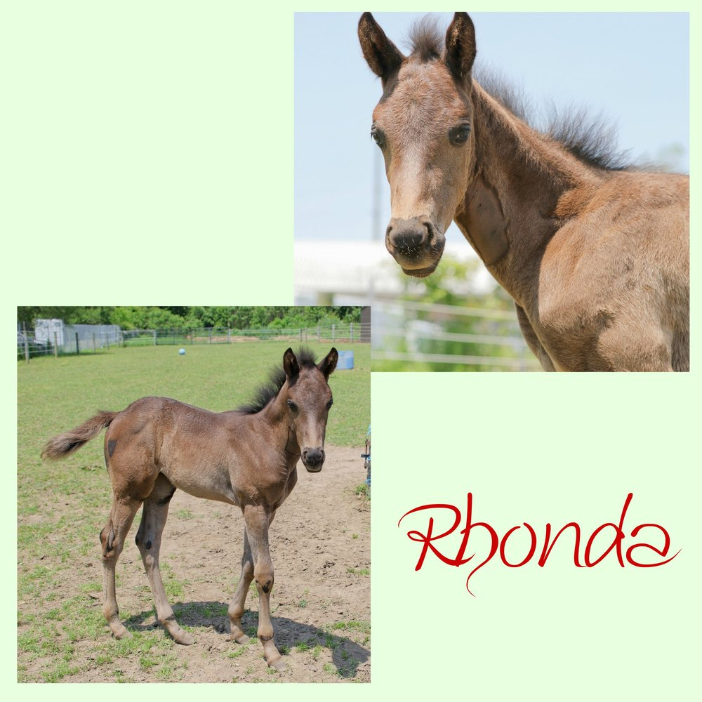 Rhonda collage.jpg