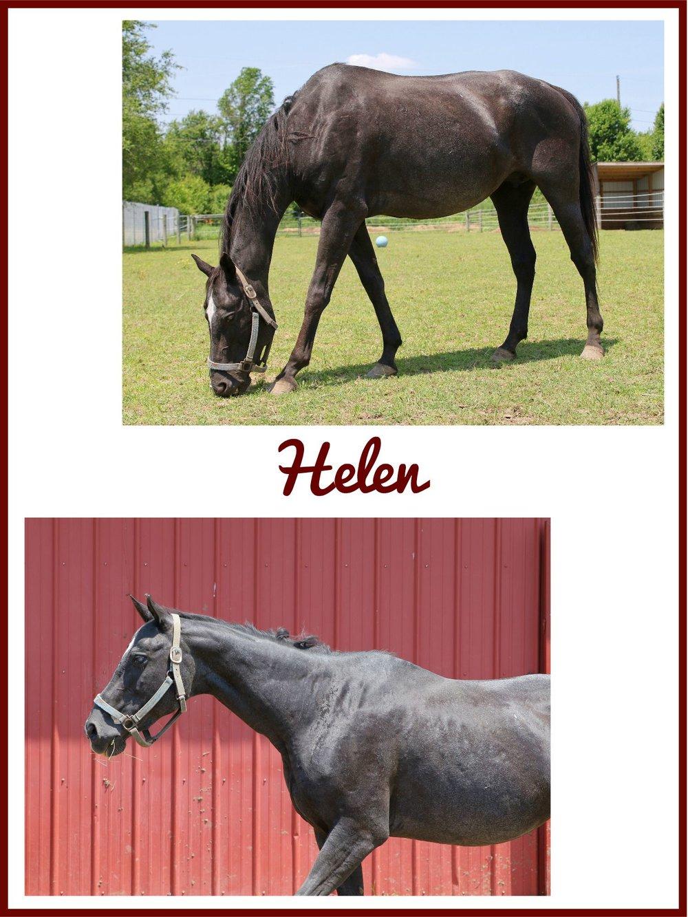 Helen Collage (1).jpg