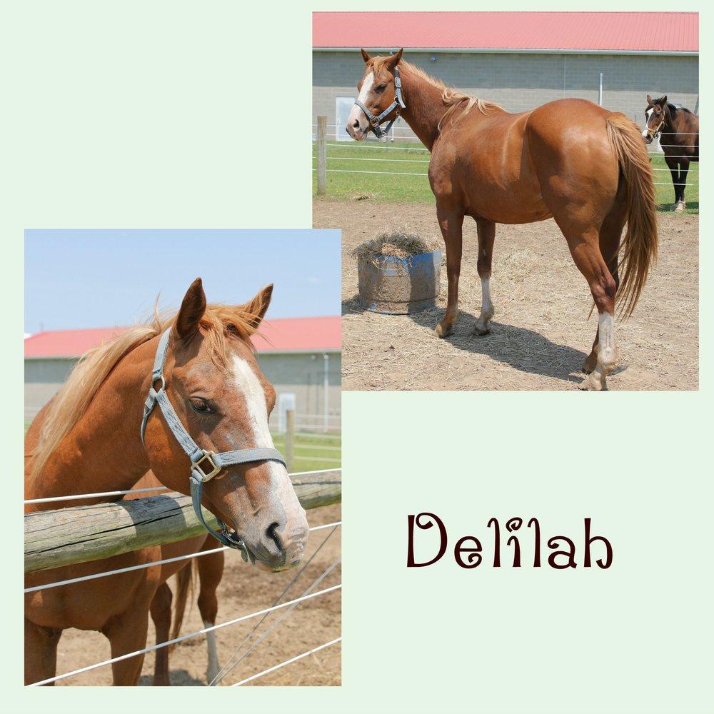 Delilah Collage.jpg