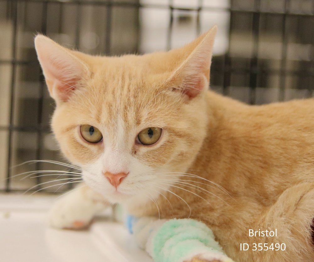 Bristol id355490 first state animal center and spca bristolg m4hsunfo