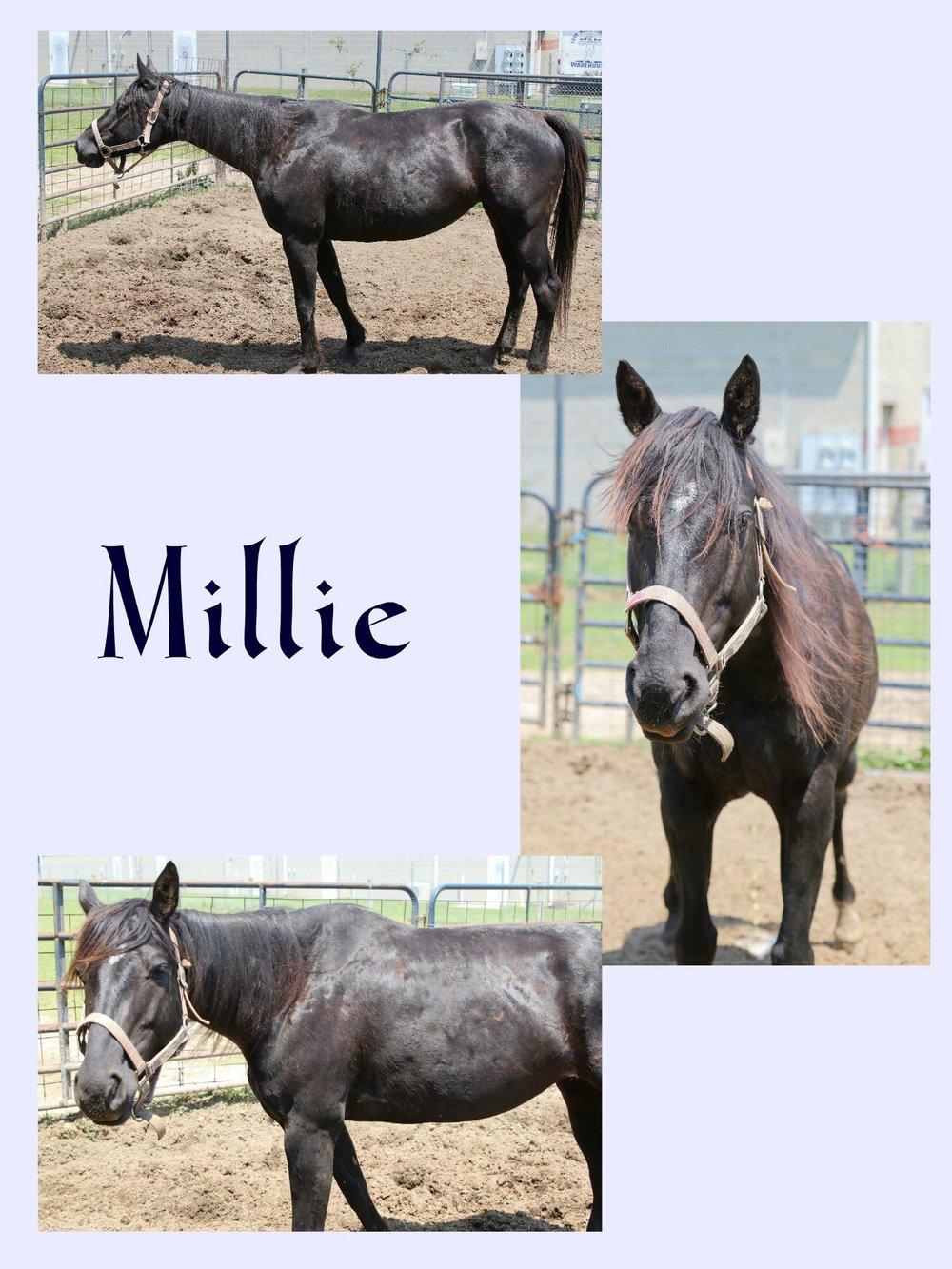 Millie Collage (1).jpg