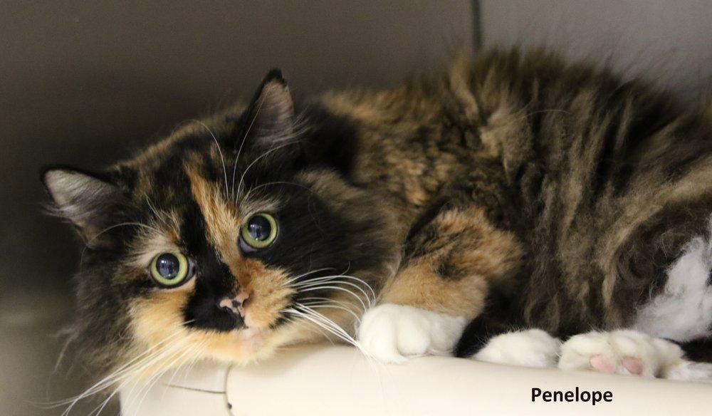Penelope.jpg