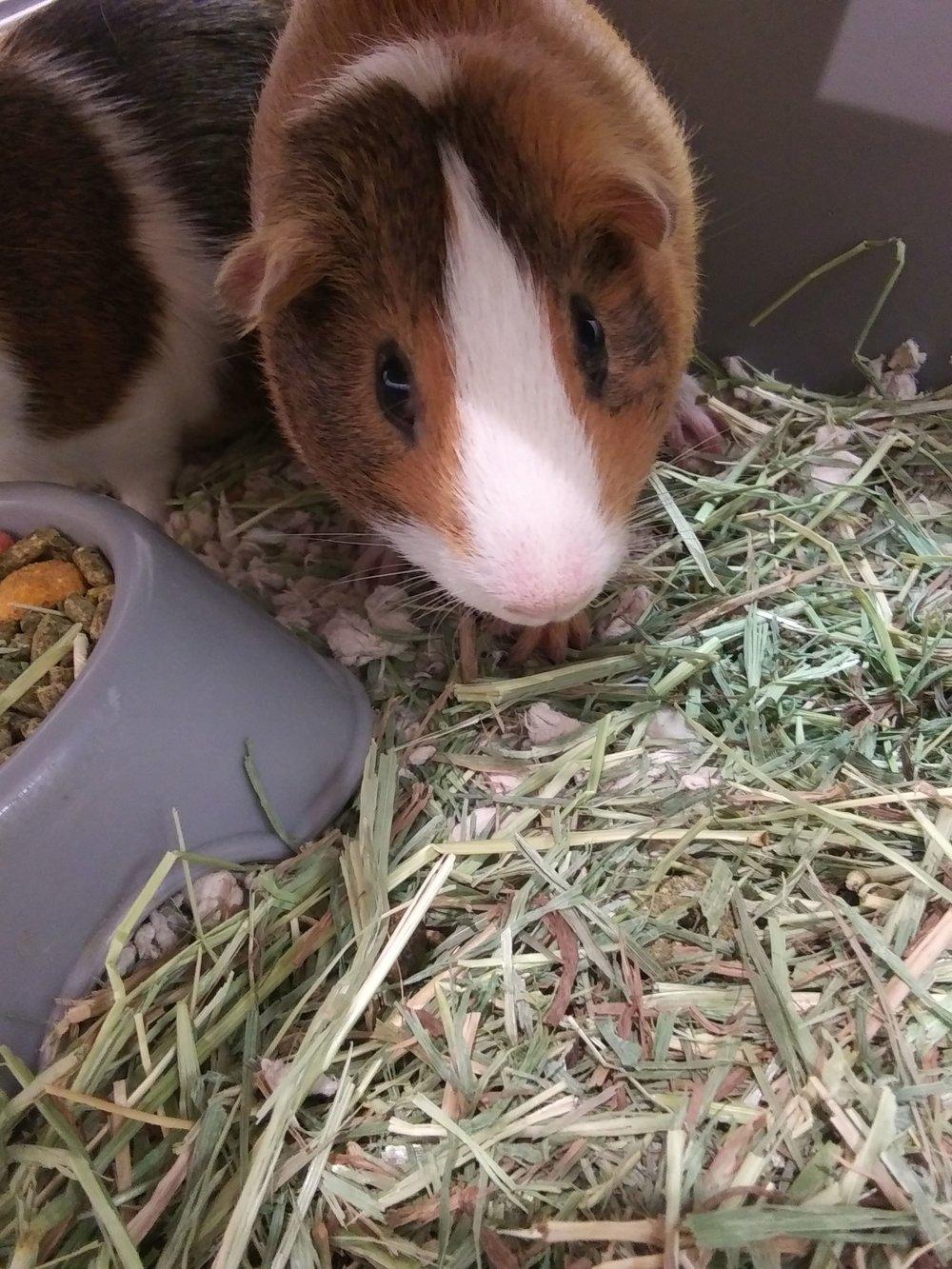 Quinn pig.jpg