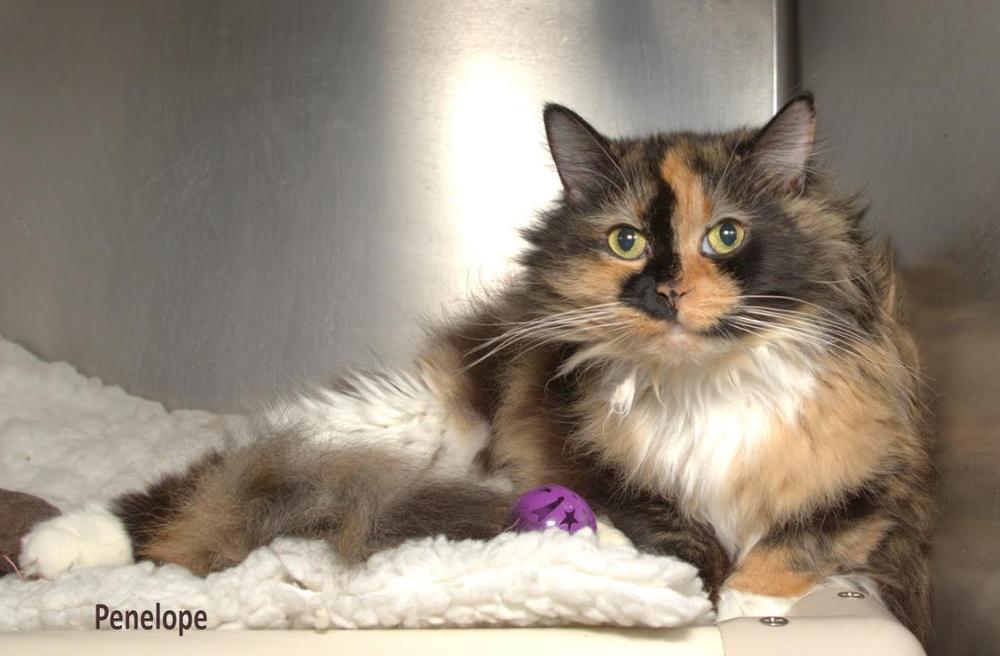 Penelope cat.png