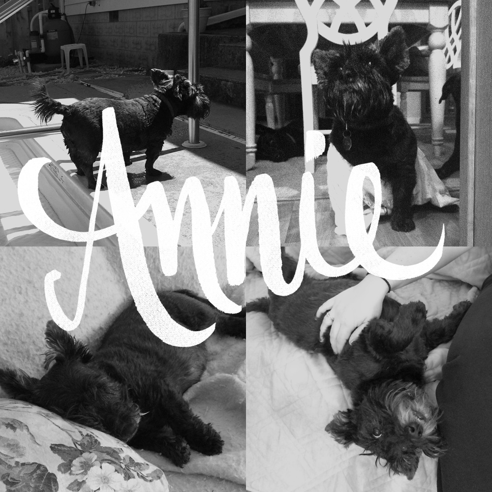 12.14.14   You were quite the little thing with such a big personality. You will forever be a part of us, Annie  bell  . #restinpeace