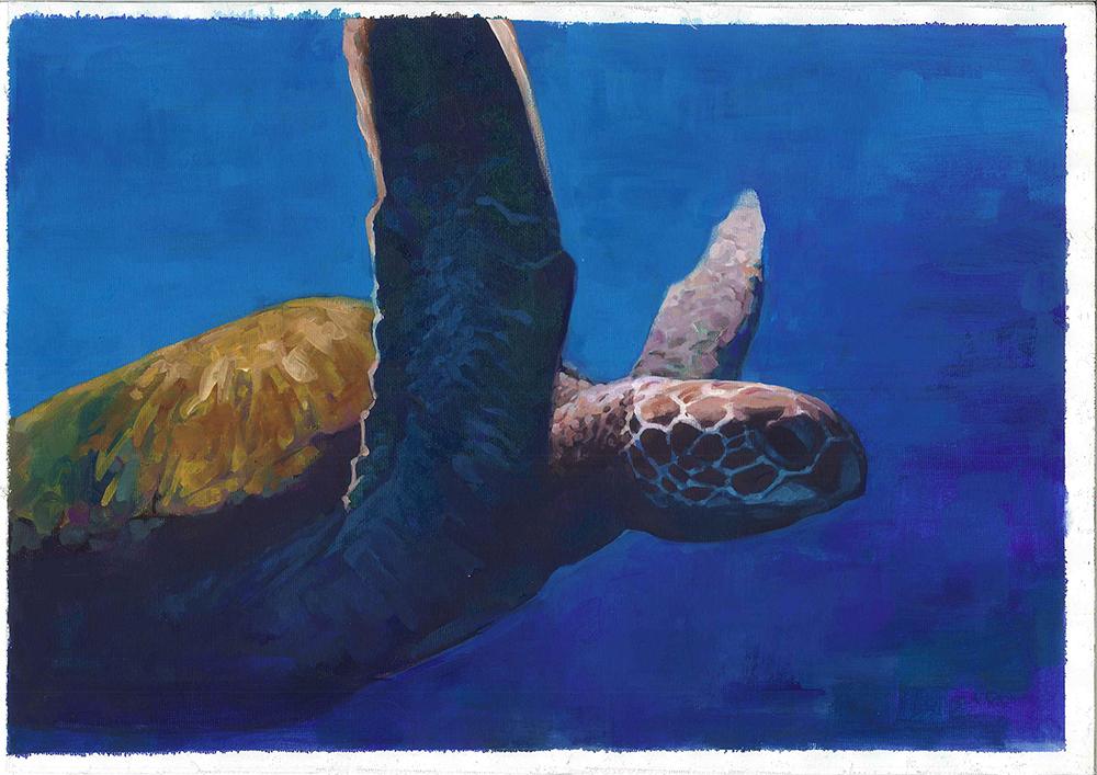 10 turtle.jpg
