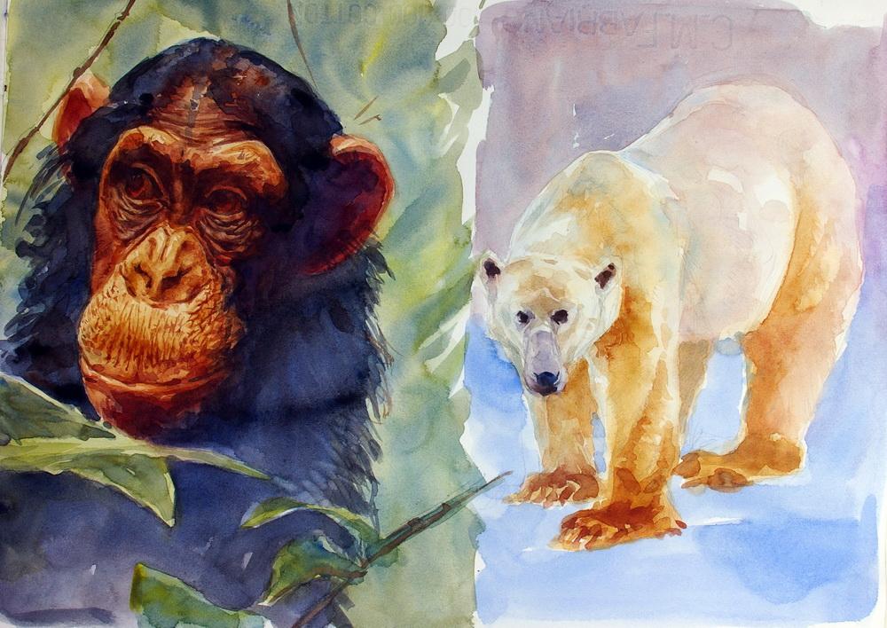2 chimpanzee.JPG