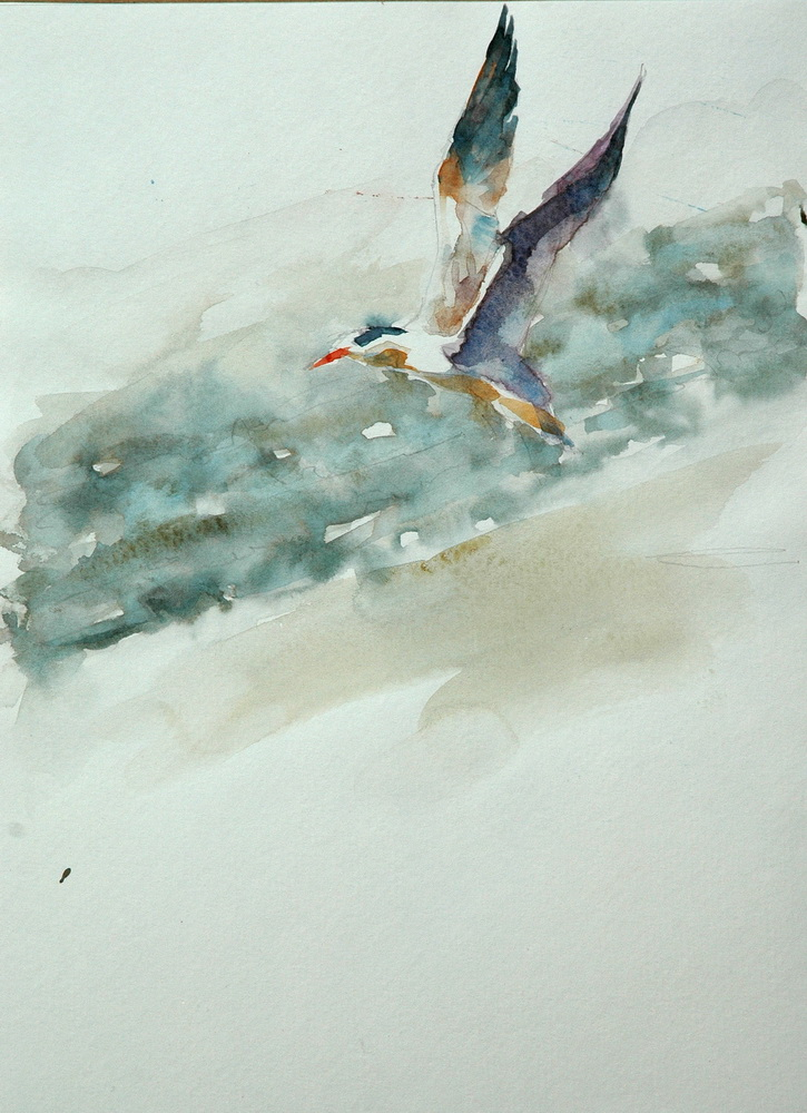 55 watercolor bird.JPG
