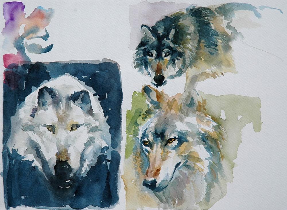 63 wolves.JPG
