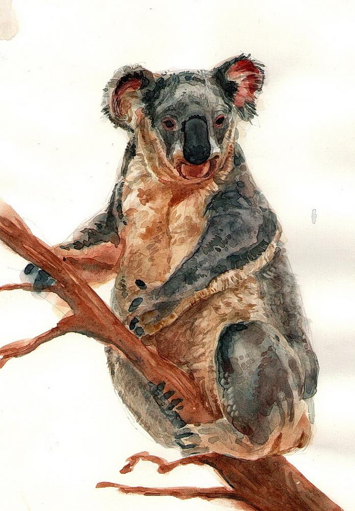 124 (14) koala.jpg