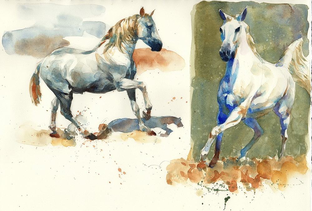 white horse watercolor  (8).jpg