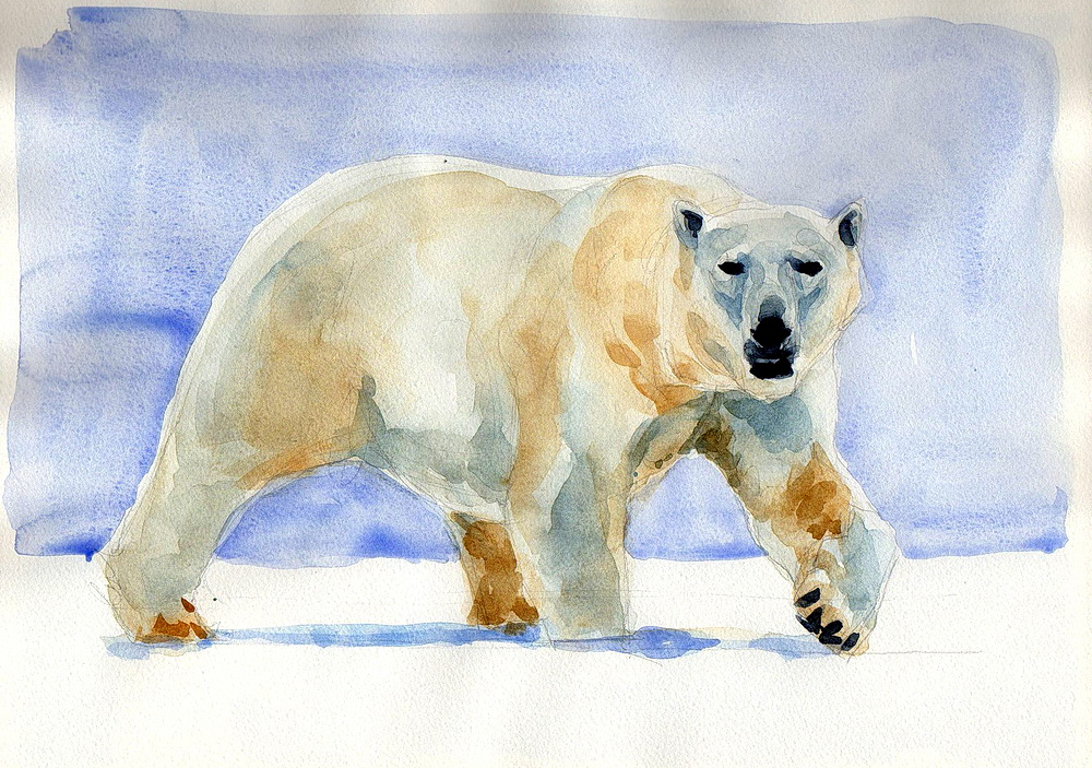 polar bear watercolor (8).jpg