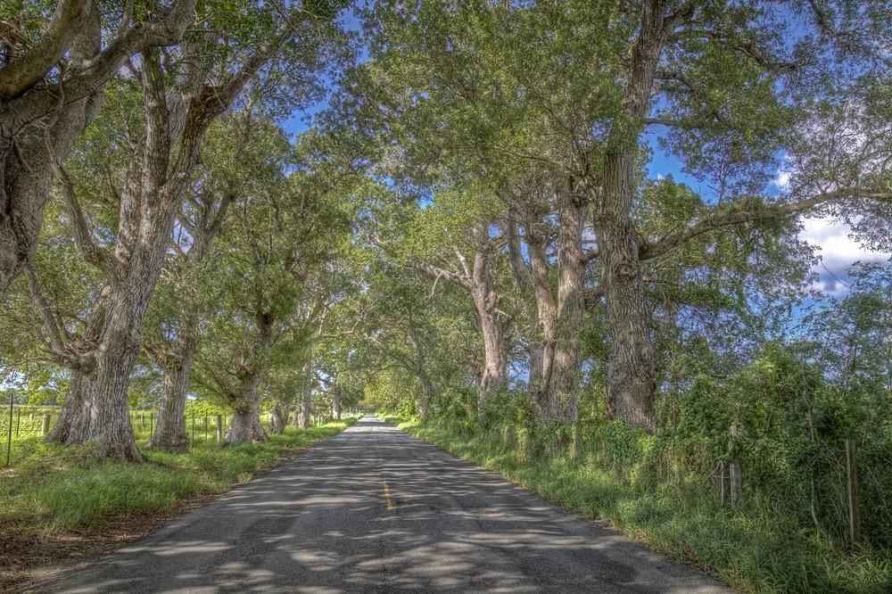 Mahogany Road