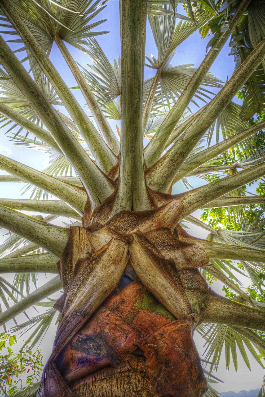 Amy's Palm