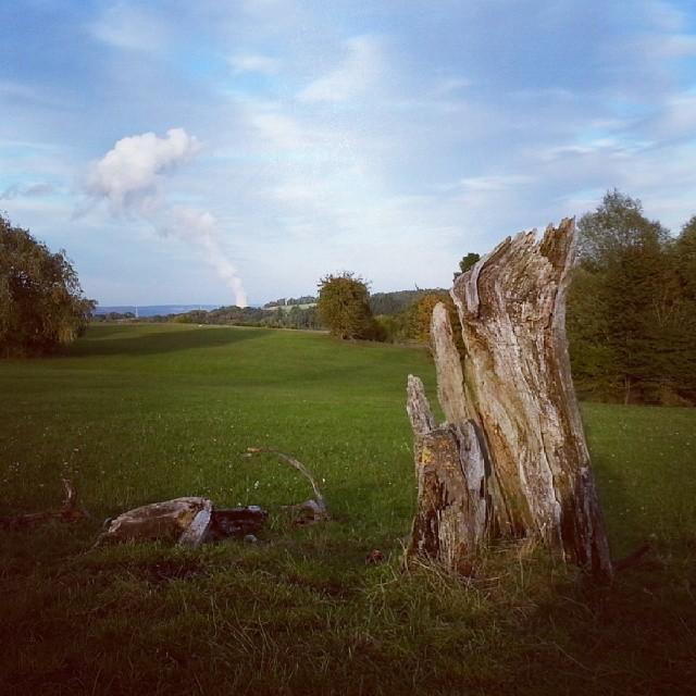Toter Baum und Atomkraftwerk
