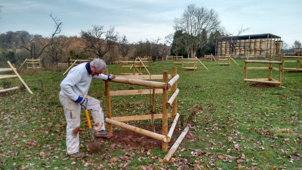 Replanting the orchard. Image courtesy of National Trust / Chris Cooper
