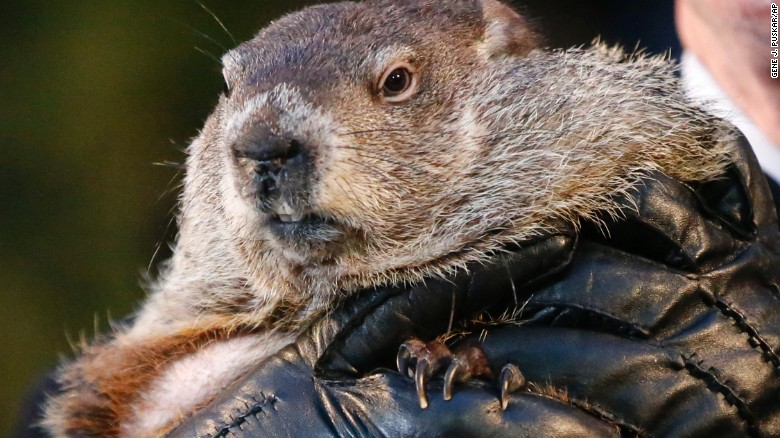 Wanted: Punxsutawney Phil, for snow against humanity; By Michael Pearson, CNN