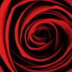 rose-150x150.png