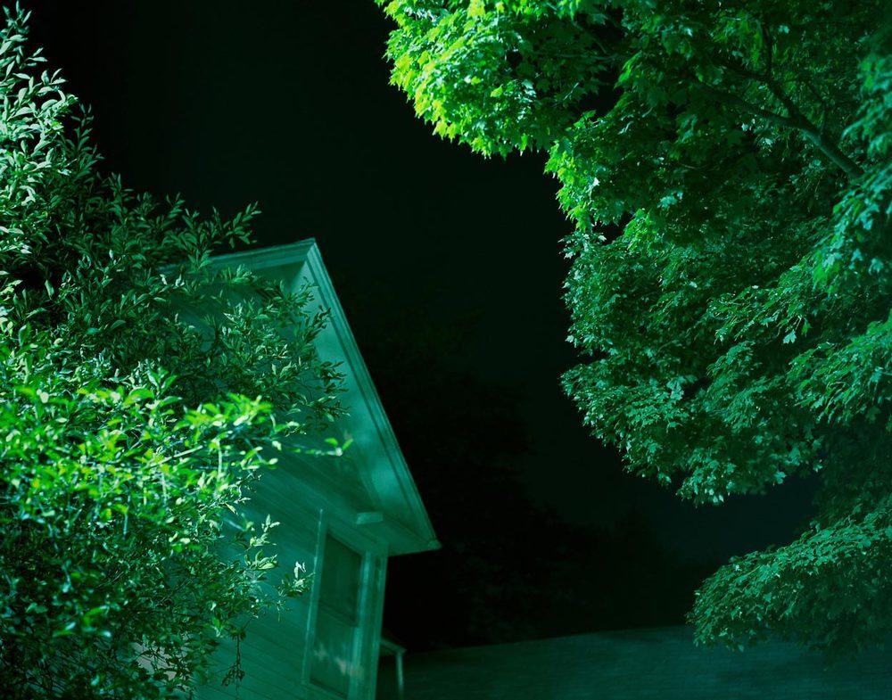 green-tree-tops-4.jpg