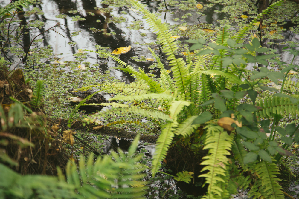 150101_Corkscrew_Swamp_0127_blog.jpg