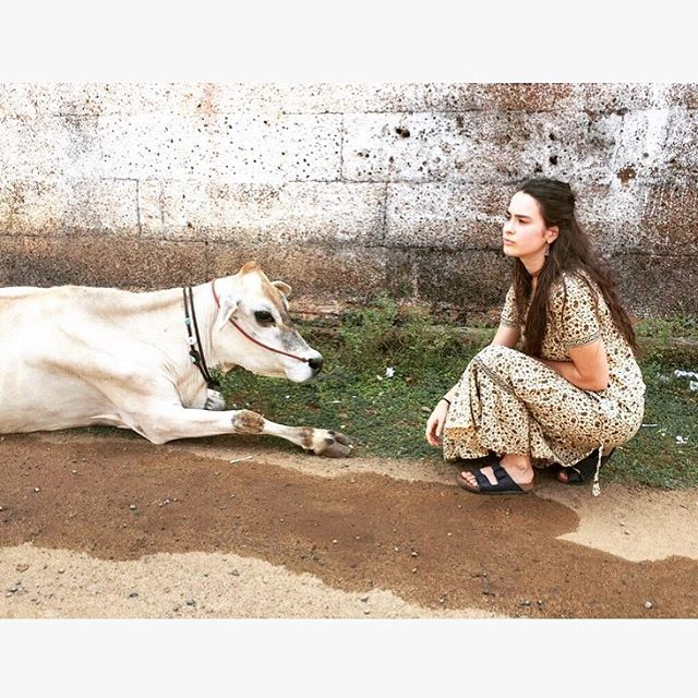 Charlotte Cow.jpg