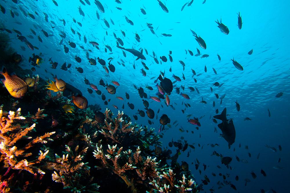 Underwater2_o.jpg