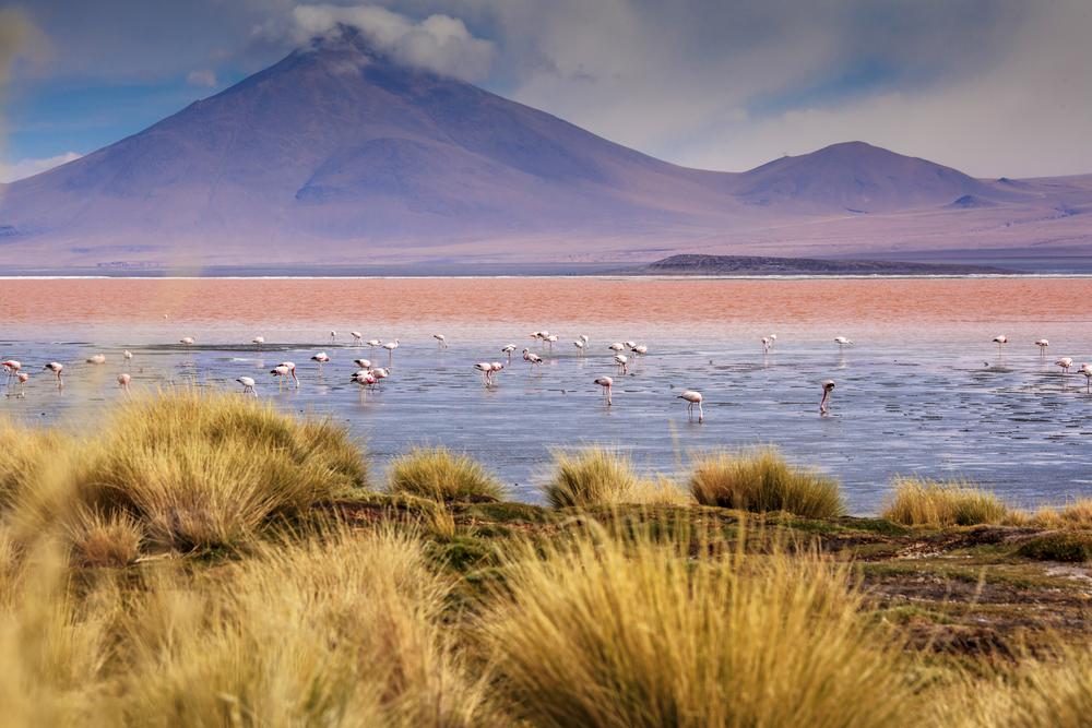 Atacama_Bolivia-122.jpg