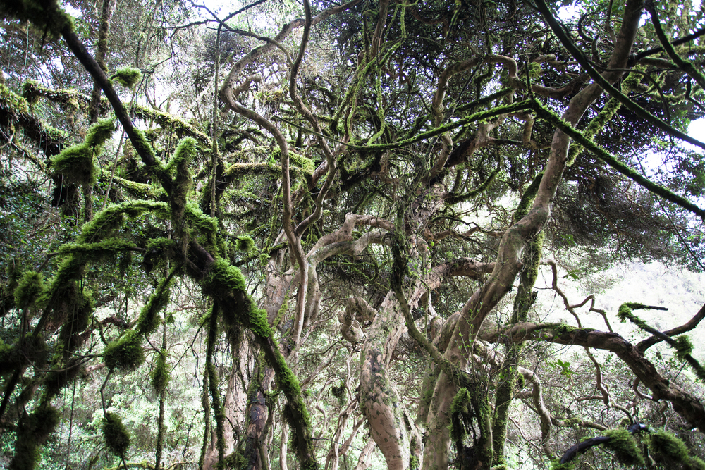 Inca_Trail_2015_36.jpg