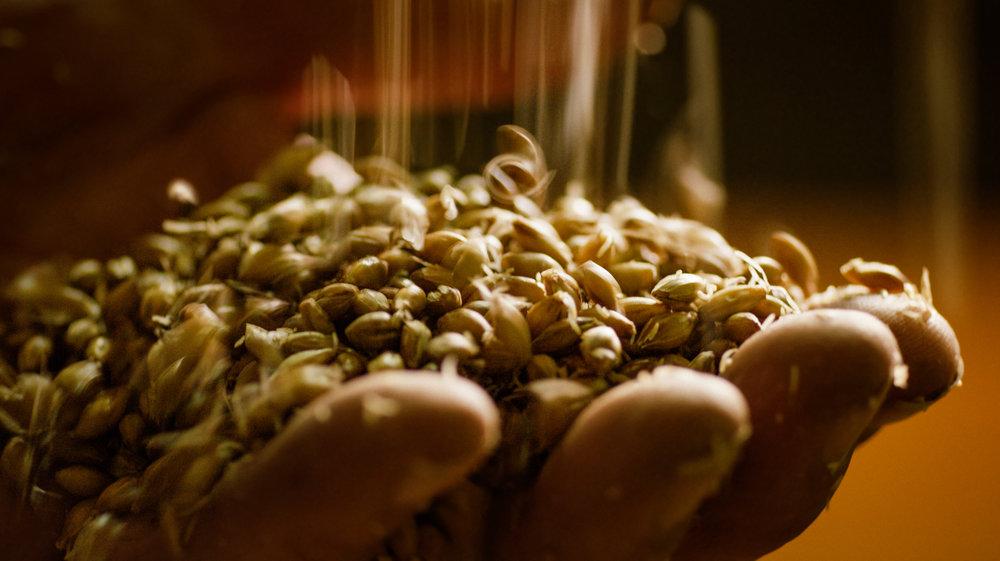 Barley_Hand.jpg