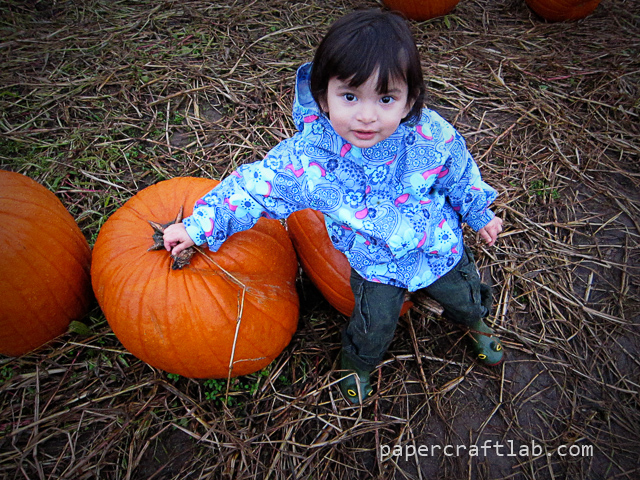 Pumpkins! (Point and shoot camera)