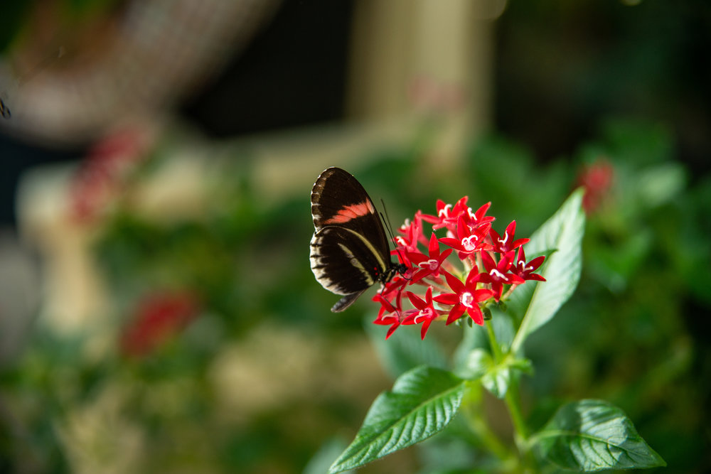 The butterflies in the garden were magnificent