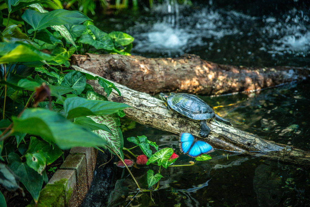Check out that Blue Morpho Butterfly...and that turtle!