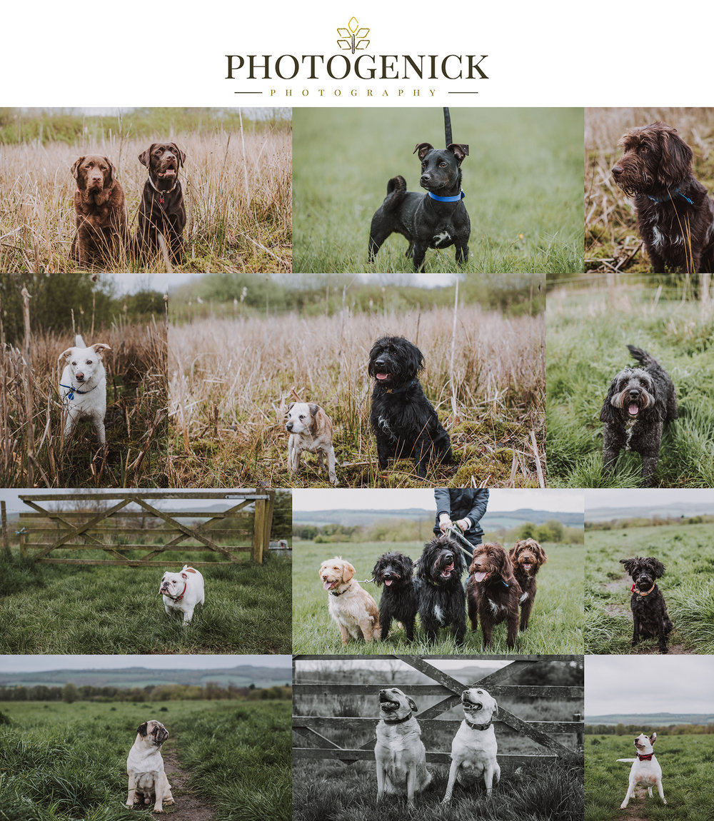 cheap dog pet portrait photography south yorkshire, rotherham.jpg