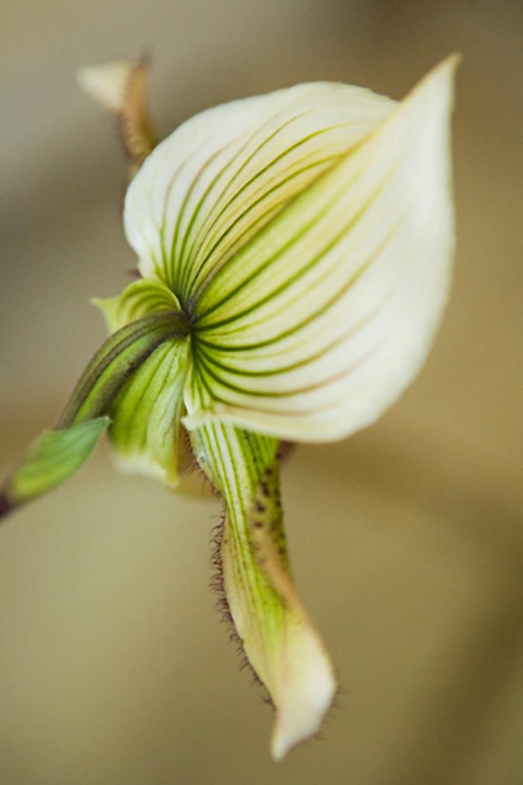 JackPrice_orchid_closeup.jpg