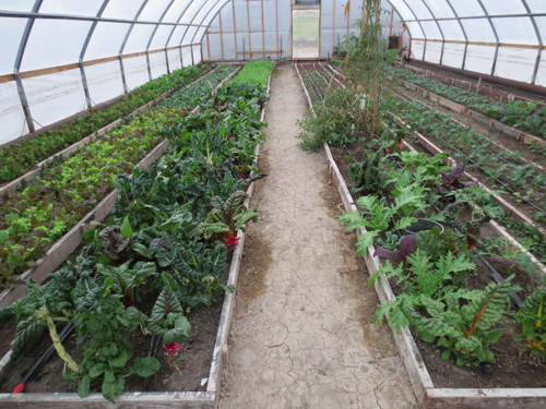 Sustainable agriculture near Buhl, Idaho - Onsen Farm