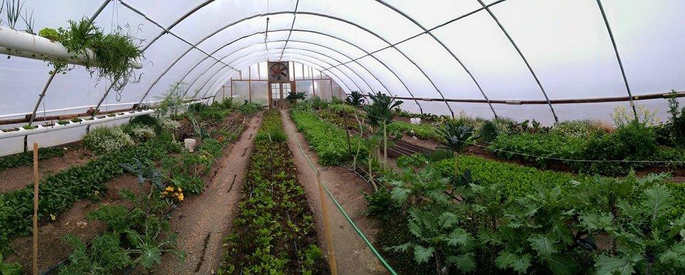 Greenhouse #3-3.jpg