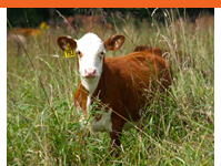 Pasture Project  Learn more about our latest research on grass-based systems.