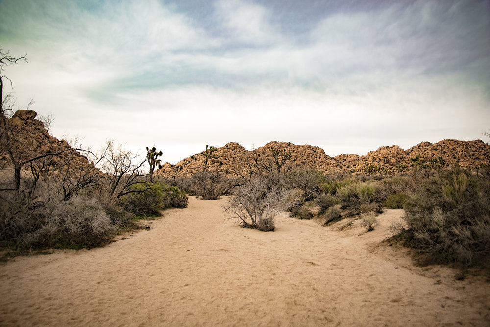 JoshuaTree_Web-3.jpg