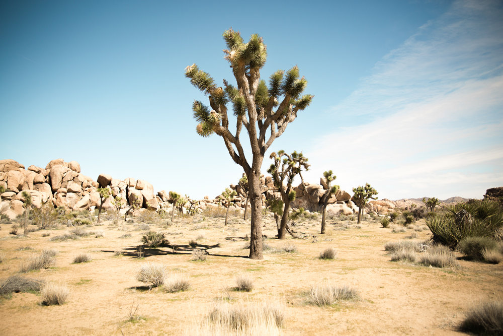 JoshuaTree_Web-16.jpg