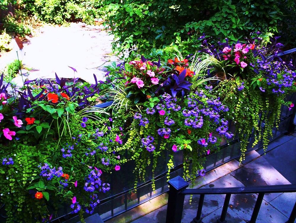 Portfolio terhaar garden design for Annual garden designs
