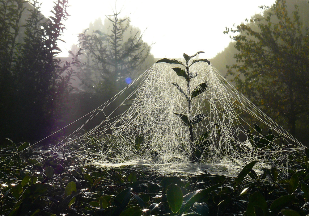 Copy of Intricate spiderwebs