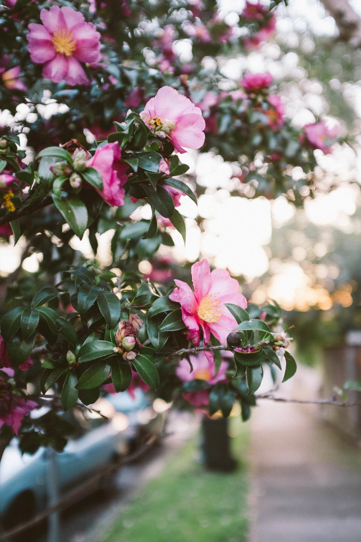 flowerssydney