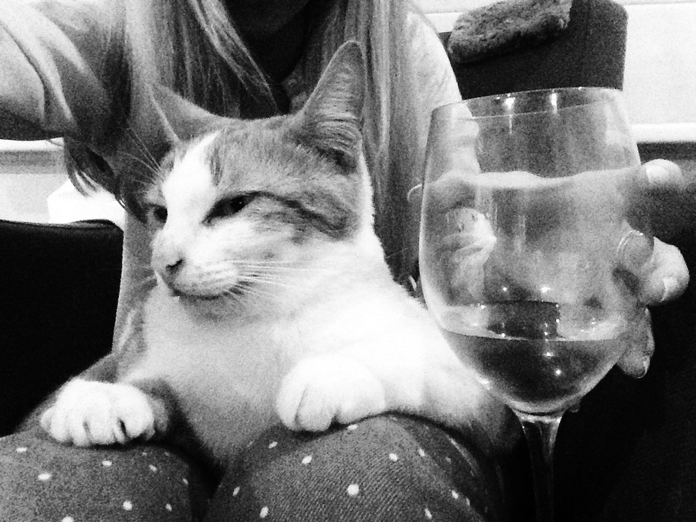 cat-drinking-wine