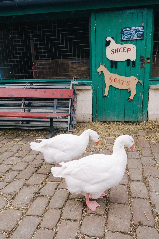 Hackney City Farm
