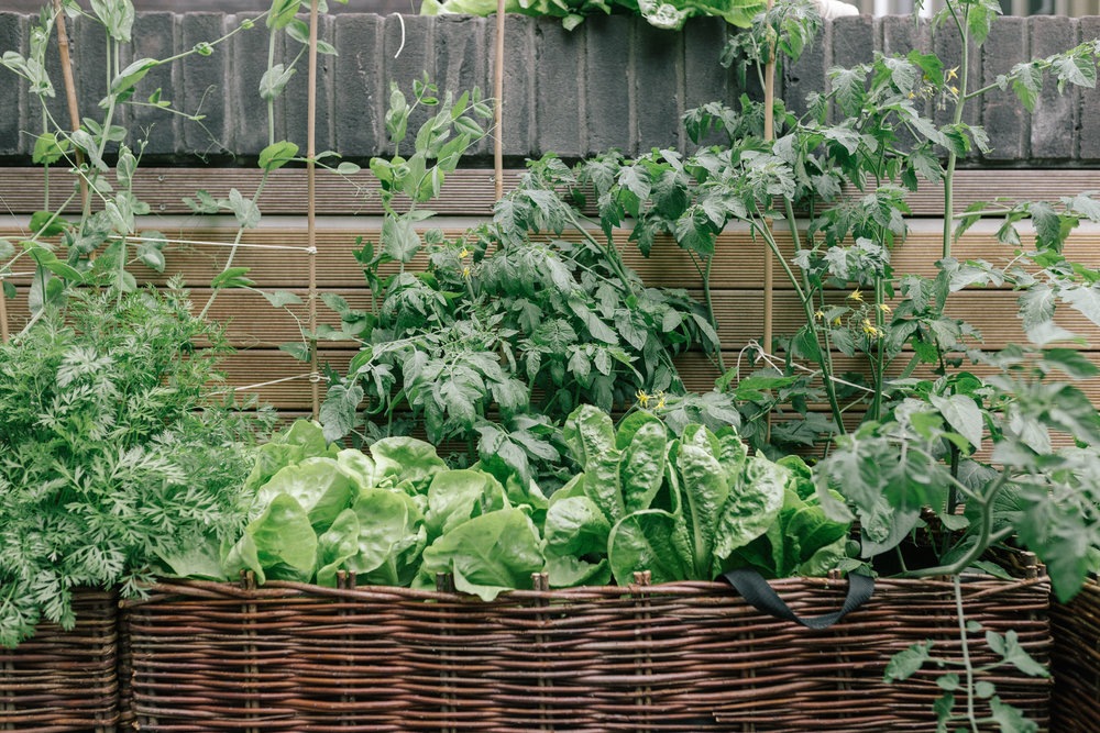 Urban Vegetable Garden London | Joy Felicity Jane