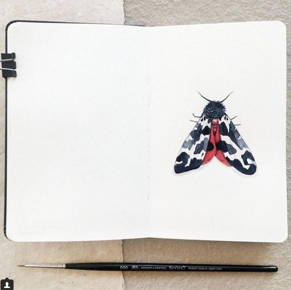 Illustration by Ella Jackson