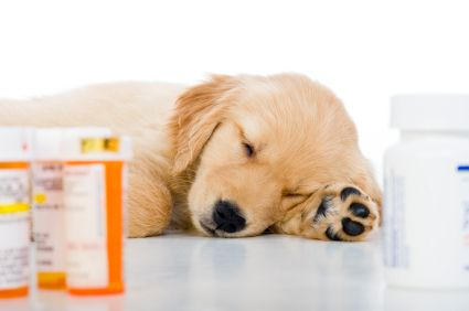 How To Give Dogs Meds