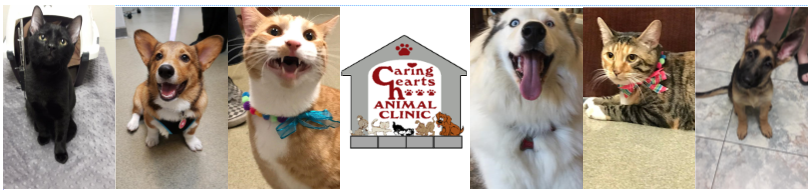 Caring Hearts Animal Clinic