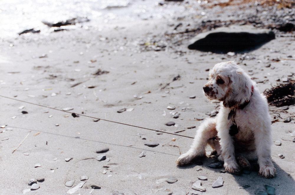 Dog_Beach_1.jpg