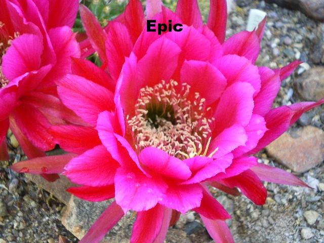 tri epic (6).JPG